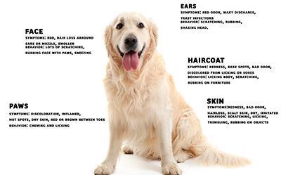 Suha hrana za osjetljive pse